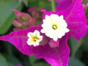 Galalee flowers 2